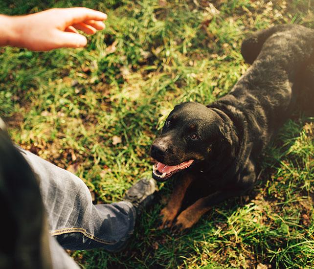 Curs d'anàlisi i intervenció del comportament del gossos