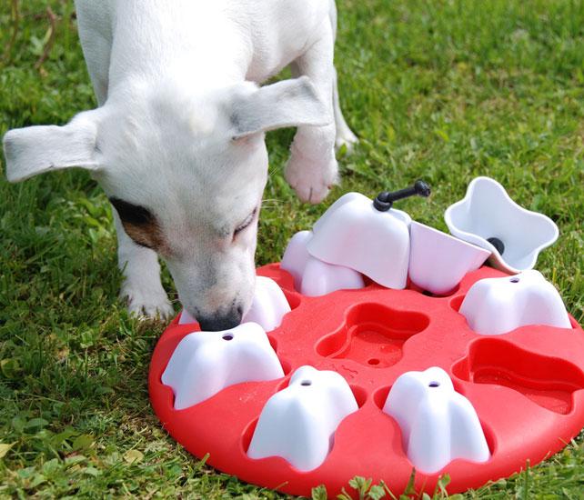 La Caixa d'Eines, 6 sessions per conèixer al teu gos